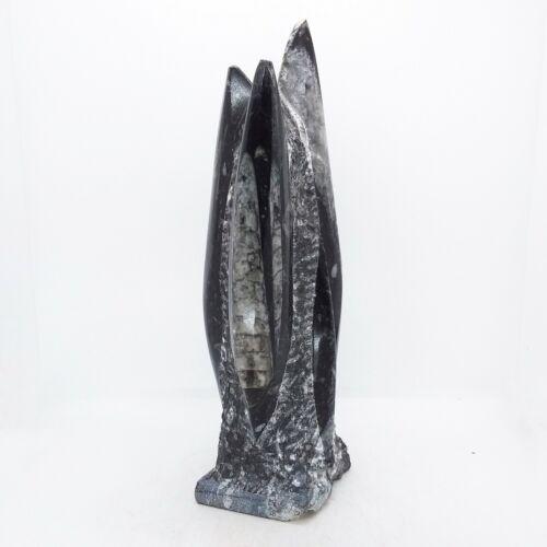 Orthoceras, Fossil, tower, specimen, display, polished, #R-2018