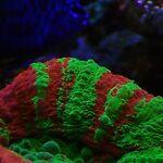 Rainbow Reef Aquaculture