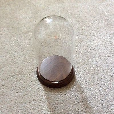 1 Only - 7 Tall X 4 Wide Glass Dome Display With Walnut Base Made In Usa