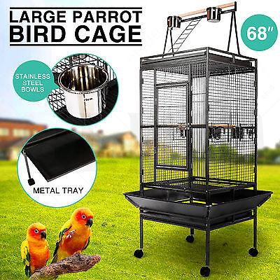 Large Bird 68