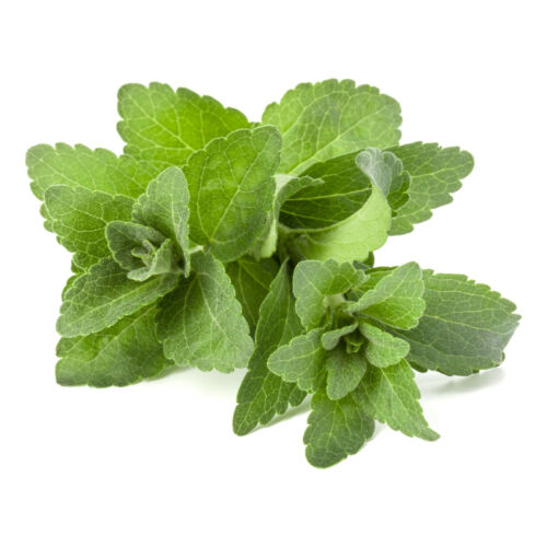 100+ Stevia Sweet-leaf Seeds | (S. rebaudiana) Sugar Herb Non-GMO - US Free Ship