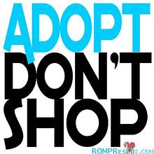Rrescue puppies,dogs, kittens and cats need homes. Sorrento Joondalup Area Preview