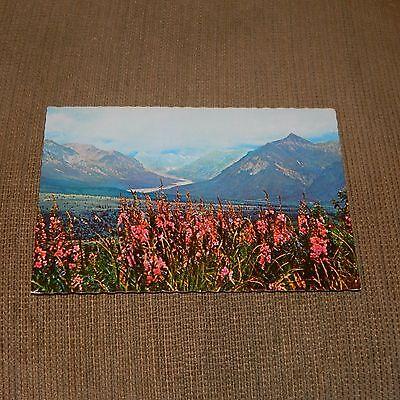Vintage Postcard Alaska Range From Eureka Flats With Fireweed, Alaska ()