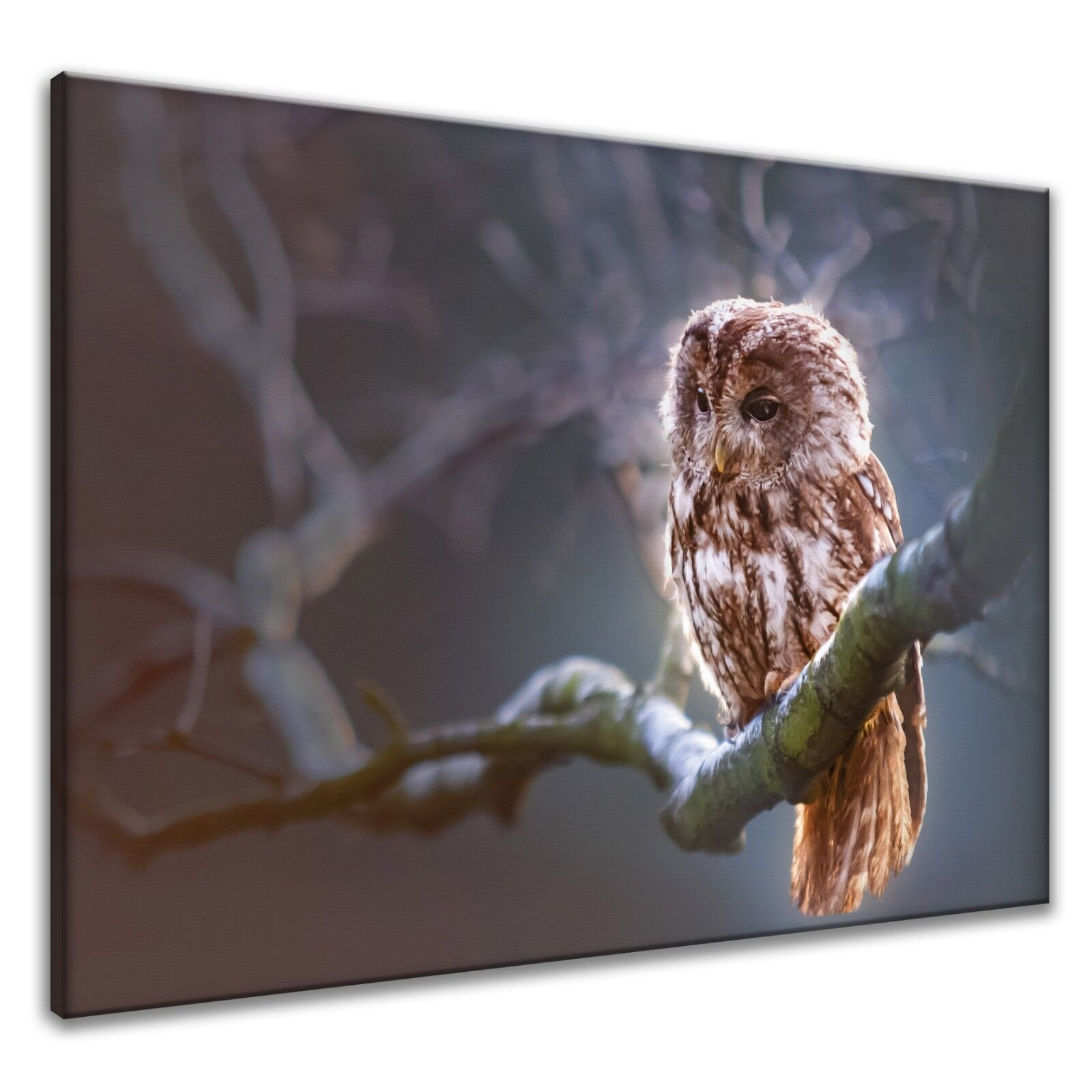 Leinwand-Bilder Wandbild Canvas Kunstdruck Tier Wachende Eule