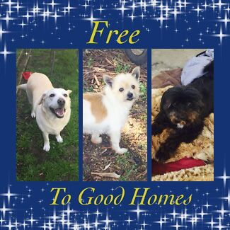 Free to good homes - 3 dogs Daisy Hill Logan Area Preview