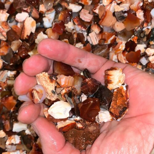 1000 Carat Lots of SMALL Natural Carnelian Rough + a FREE Faceted Gemstone