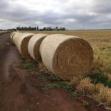 Barley Straw Hay Brookstead Toowoomba Surrounds Preview