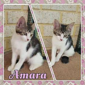 All of these Kittens Need a Place to Call Home Taree Greater Taree Area Preview