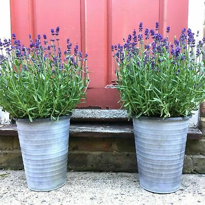 2 x Tall Vintage Style French Grey Large Round Metal Garden Planters Flower Pots