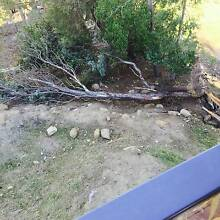 Free to Giveaway, Large Gum Tree for Firewood West Hobart Hobart City Preview