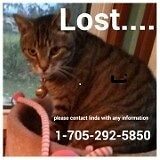 Lost cat from Ennismore