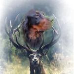 Jagd-Hund-Shop