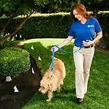 Invisible Fence® Brand Perfect Start™ Training! Peterborough Peterborough Area image 4