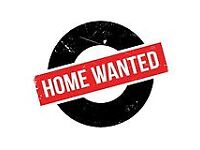 Wanted 1 bed flat or studio short term let