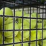 Assorted Premium Brands Pre-owned Tennis Balls for Sale.......As little as $0.60 Only