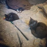 two black kittens looking for a home