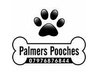 Palmers Pooches. Dog Walking & Boarding. Pet Services.07976876844