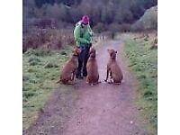 Dog Walker and Trainer - Walking and training available Cumbernuald and Surrounding Areas