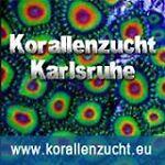 Korallenzucht Karlsruhe UG