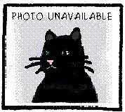 """Young Female Cat - Domestic Short Hair: """"Glitter"""""""