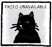 "Young Female Cat - Domestic Short Hair: ""Melissa"""