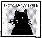 "Young Female Cat - Domestic Short Hair: ""Dewdrop With Petal"""