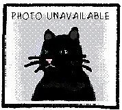 "Young Female Cat - Domestic Short Hair: ""Dark Star"""