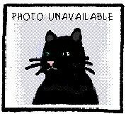 "Adult Female Cat - Domestic Short Hair: ""Bonnie"""