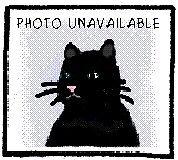 """Adult Female Cat - Domestic Medium Hair: """"Mavis"""""""
