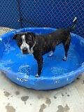 URGENT FOSTER OR FOREVER HOME NEEDED FOR SWEET BEASLEY