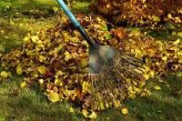 Leaf ,Tree , Brush , Junk Removal Services