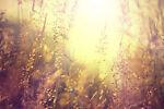 Juniper Meadows