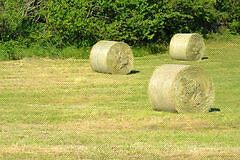 Horse quality 5x4 round bales hay Lang Lang Cardinia Area Preview