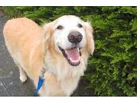 MUDDYPAWS DOG WALKING &PET SITTING SERVICE WEST LOTHIANS