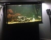 50 Gallon tank/aquarium