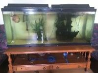 55 Galons Fish tank with fish for sale