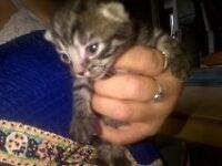 4 sweet, cute and cuddly kittens for sale, 3 male, 1 female kittens, various colours