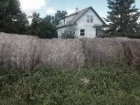 Cheap Hay for Sale