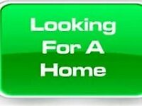 wanted... looking for 1 bed flat max 500pm including bills cardiff- close to roath