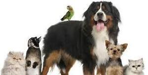 Gardiennage d'animaux  à domicile