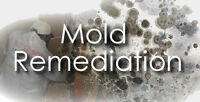 Local mold removal services for KW