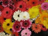WHOLESALE BULK FRESH FLOWERS
