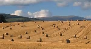 Custom Baling offered for hay or straw