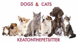 Pet sitting For Dogs And Cats SW
