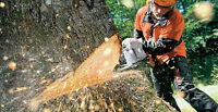 Chainsaw Carving Artists Wanted - Novice & Professional Comp.