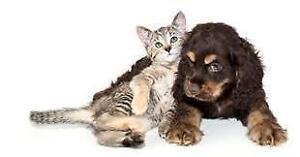 Garderie pour animaux