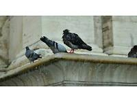 *Pest control* Pigeon Control & Clean, Mouse&Rat proofing. Jetwashing