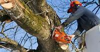Desert Oak Tree Removal Service