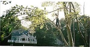 Tree Removal, Property Damage Control