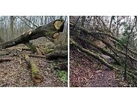 Wanted: Tree Trunks and logs